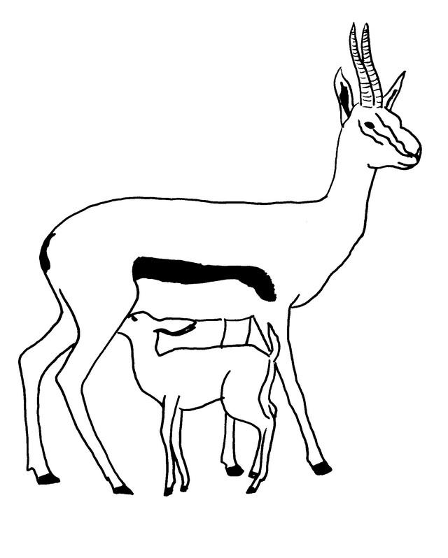 Coloriage Animaux Antilopes 1
