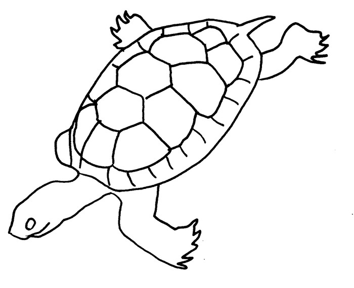 Coloriage Animaux Mer.Coloriage Animaux Tortue De Mer 16