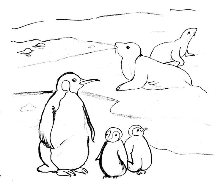 Coloriage animaux phoques 31 - Dessin banquise ...