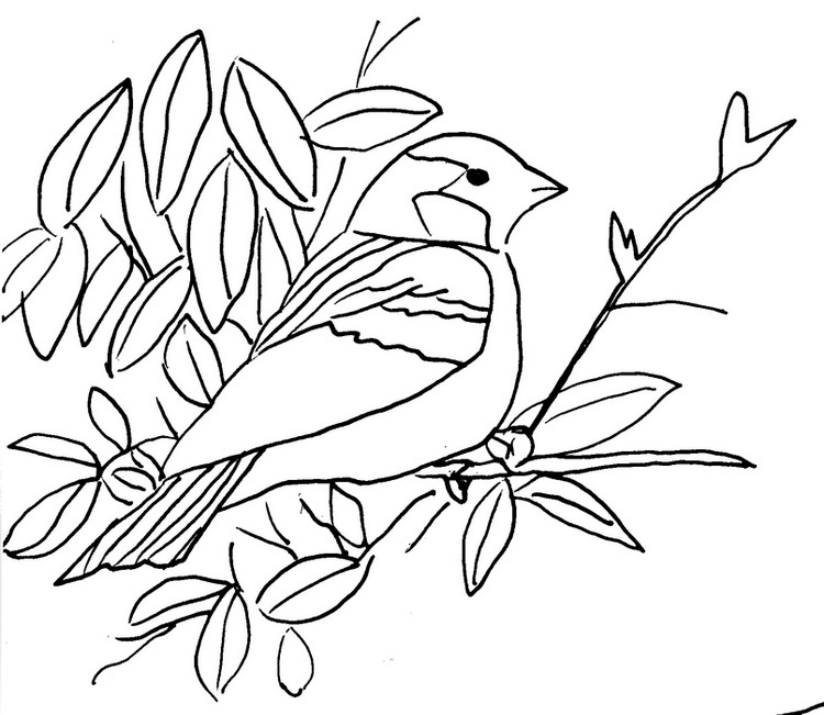 Coloriage Animaux : Oiseau 4