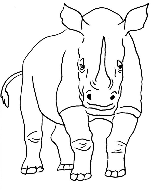 rhinoceros coloring pages getcoloringpagescom