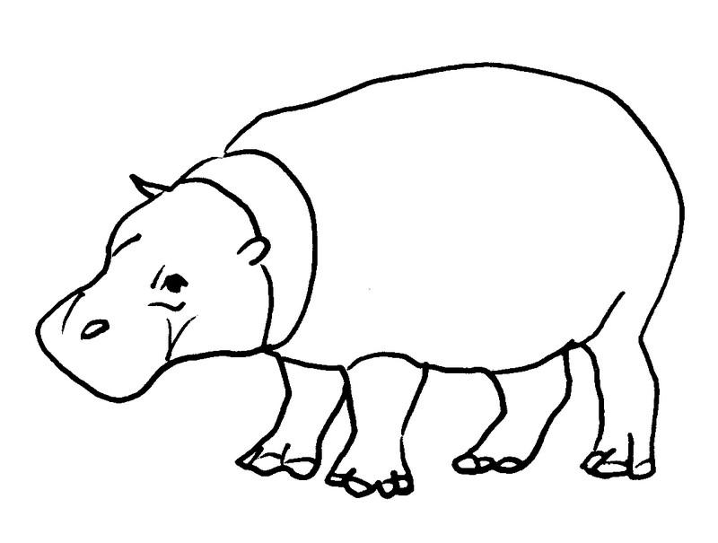 Coloriage Animaux Hippopotame 6