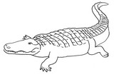 Coloriage Crocodile