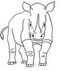 Coloriage Rhinoc�ros