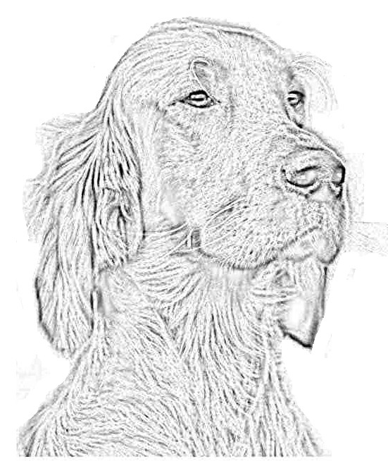 Coloriage Chien Cocker.Index Of Coloriages 327 G