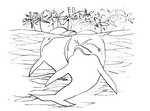 Coloriage Dauphins