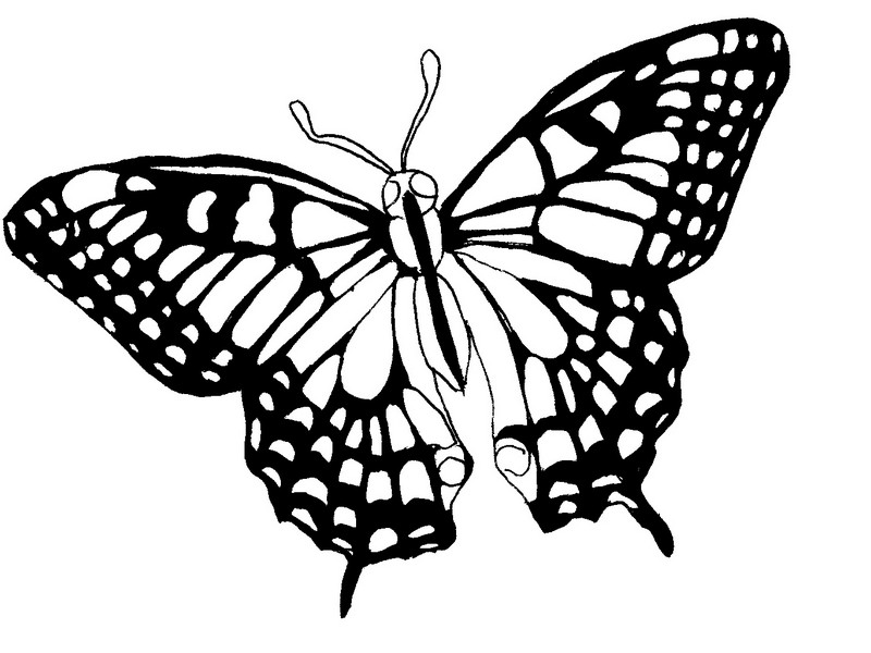 Dessin tribal papillion - Coloriage de papillon ...