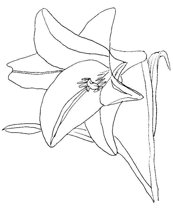 Coloriage Fleurs Jonquille 8