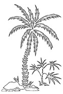 Coloriage Plage Palmiers