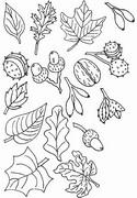 Coloriage Feuilles, noix, glands, …