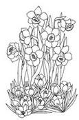 Coloriage en ligne Narcisses